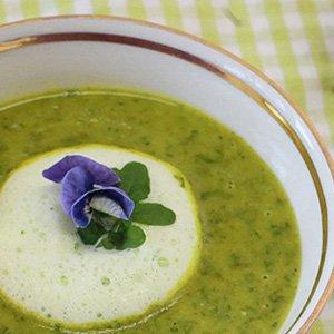 Frühlingsrezept Wildkräuter Suppe