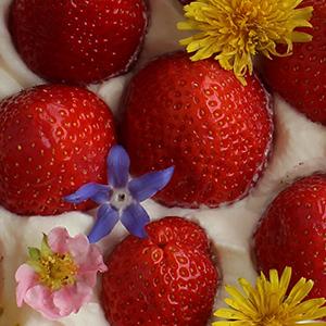 Rezept Erdbeerkuchen Muttertag